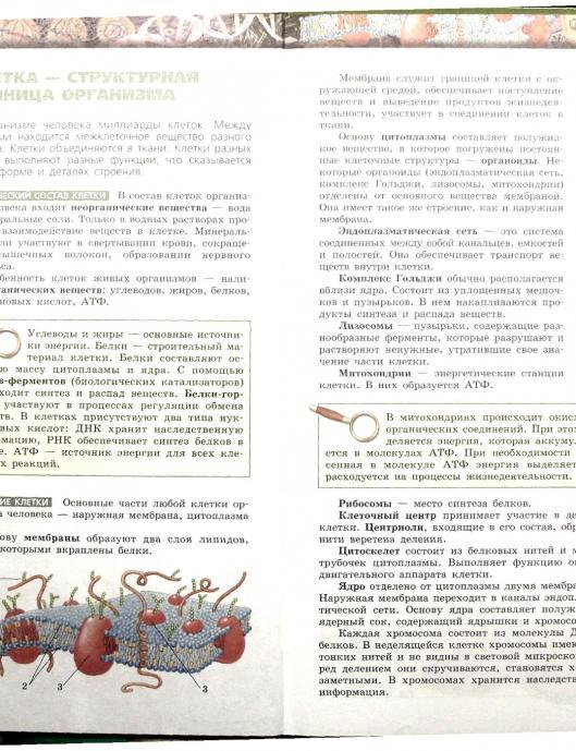 Гдз по биологии сухорукова 8 класс учебник